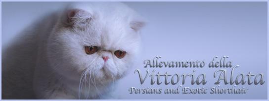 http://www.persianidellavittorialata.it/images/banner/ciccio-media.jpg